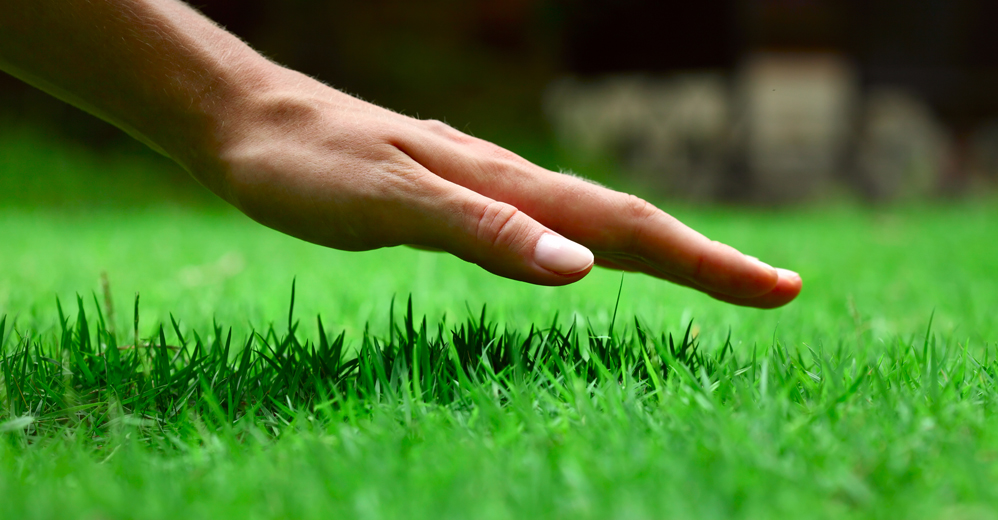 GOING GREEN FOR THE HEALTH OF YOUR LAWN AND THE WELLNESS OF YOUR FAMILY