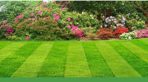 lawn-care_18