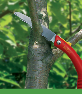 tree-shrub-care_07